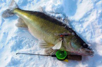 Как правильно ловить судака зимой